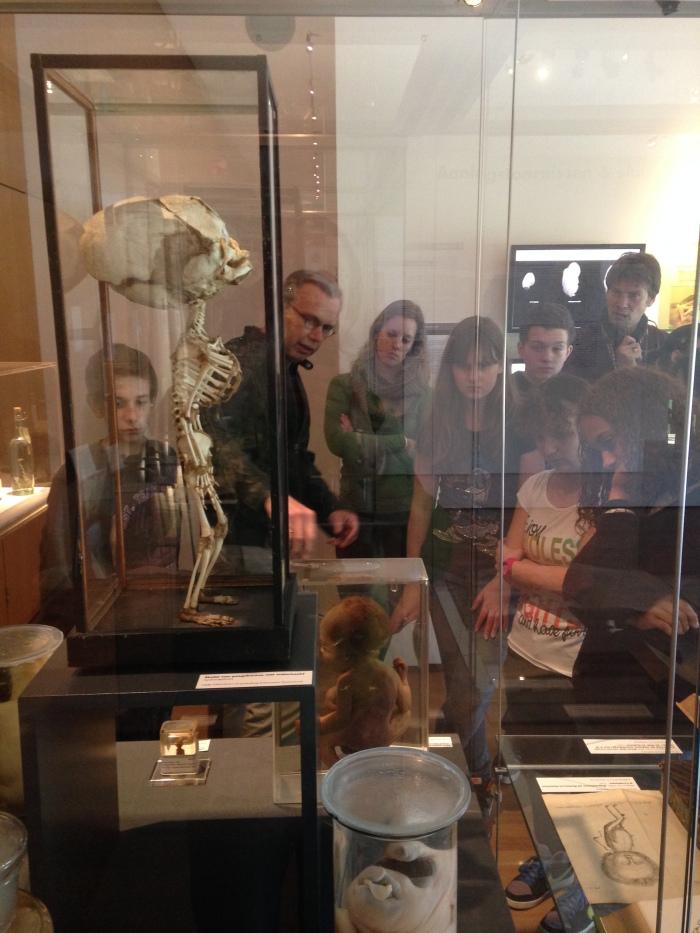 Onderwijs bij de tentoonstelling over aangeboren afwijkingen in het Natuurhistorisch Museum Rotterdam, maart 2014 (foto Kees Moeliker)