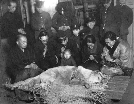 Hachi-ko werd dood gevonden bijna het station