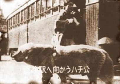 Hachi-ko tevergeefs wachtend op zijn baas op het perron van het treinstation