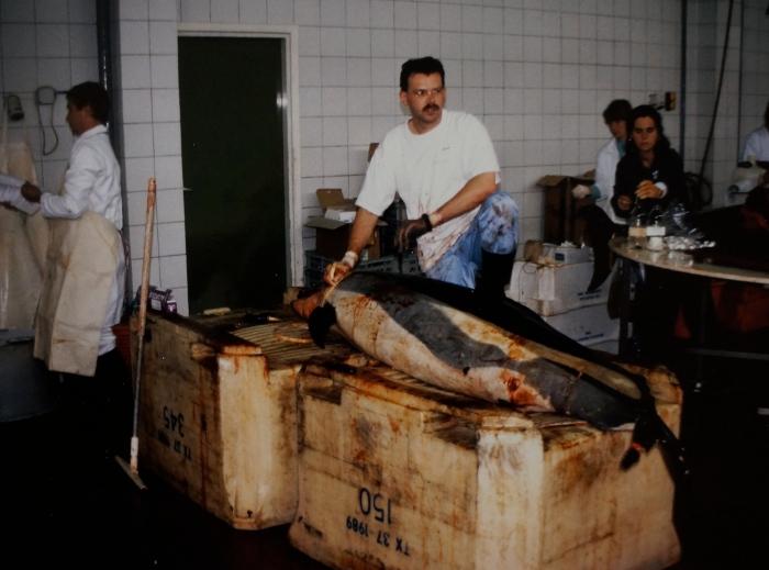 Tijdens secties op witflankdolfijnen. RIVO, IJmuiden 1998
