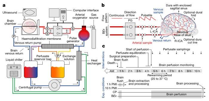 brainex-schematic